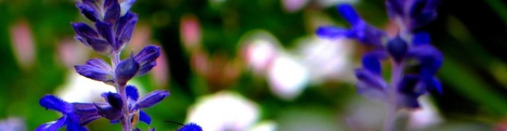 Naturopathie et Prévention