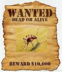 moustiques 2